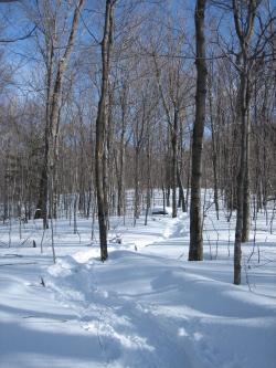 Schneeschuhspuren im Wald